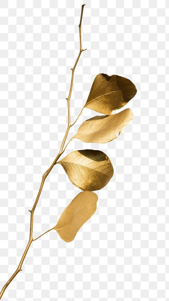 Eucalyptus Round Leaves Painted In Gold Design Element Free Image By Rawpixel Com Teddy Rawpixel Leaf Art Gold Design Flower Drawing