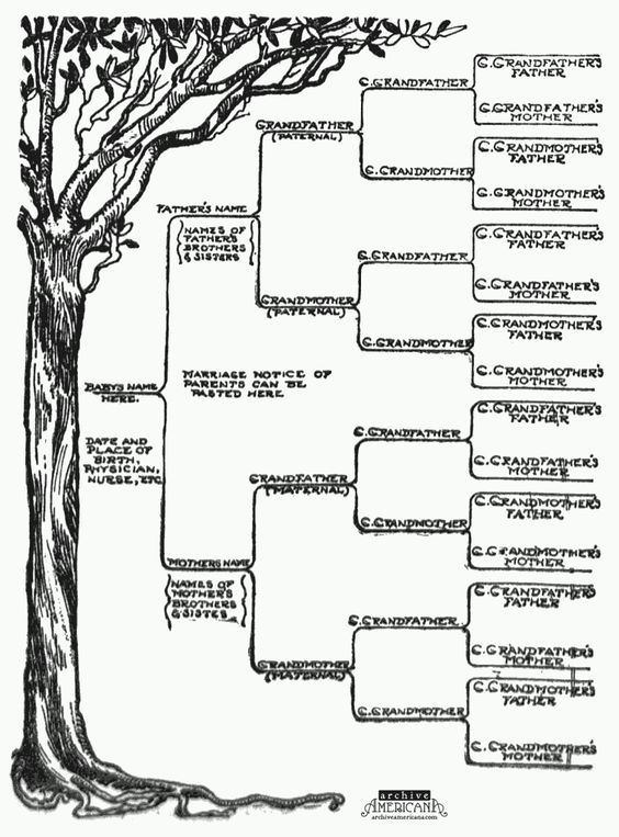 Start a genealogical record for your family (1905 | Trees, Vintage ...
