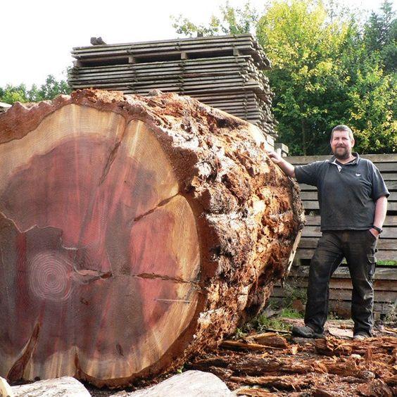 Huge English log