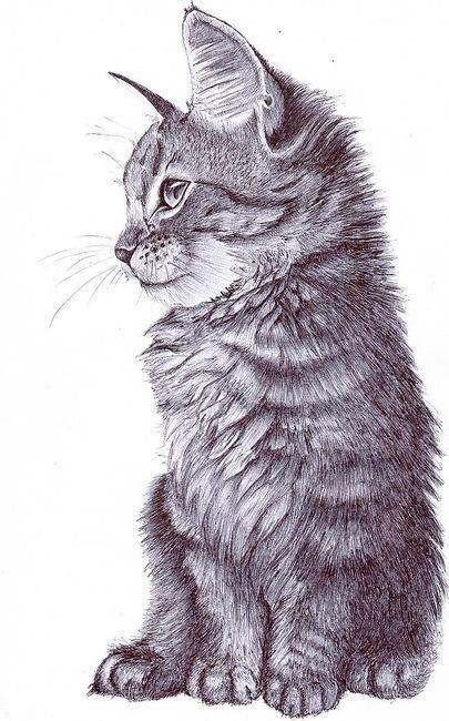 gattino disegnato a matita in bianco e nero
