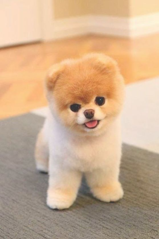 Puppies Always Help My Name Is Kendalyn And I Can Take Care Of It It Looks Very You Like This Messige Just Call Me My Numder Is 2547336 Baby Dogs Baby