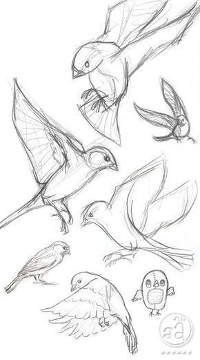 5 Free & Easy Animal Sketch Drawing Information & Ideas