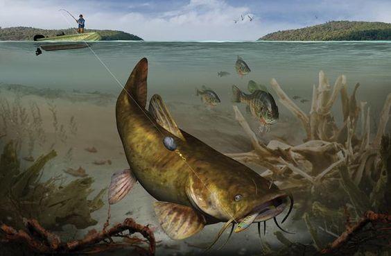 Smoke a flattie gear and tactics for big flathead catfish for Catfish fishing gear