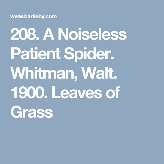 Noiseless patient spider essay