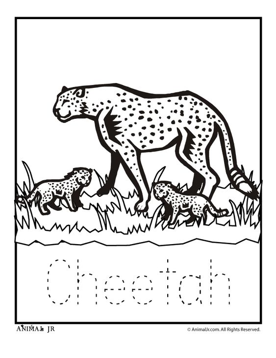 Zoo Animal Coloring Pages Zoo Babies Zoo Babies Cheetah Classroom Jr Mammals Mammals In 2020 Zoo Animal Coloring Pages Animal Coloring Pages Baby Coloring Pages