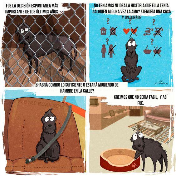 Aprende lo Hermoso que es Adoptar un perro de la calle