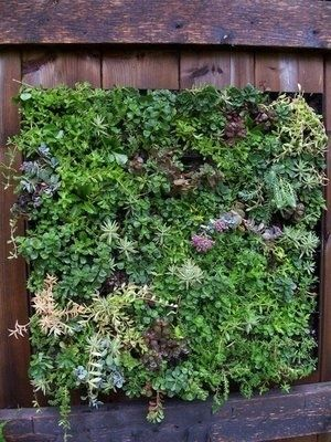 Vertical garden, for wall where current utility room is