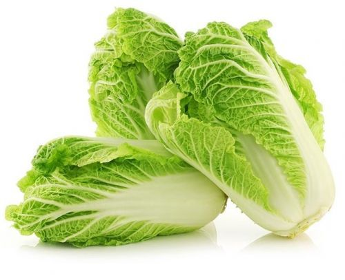 Michihili Chinese Cabbage Chinese Cabbage Cabbage Cabbage Seeds