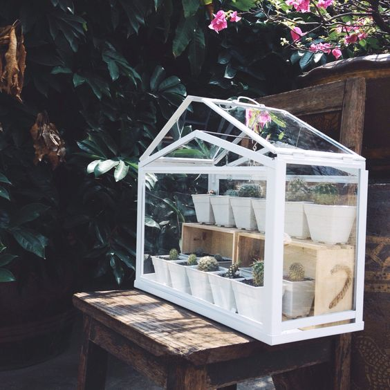 ikea terrarium greenhouse for my cactus cactus pinterest wishing well wells and greenhouses. Black Bedroom Furniture Sets. Home Design Ideas