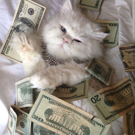 catscenter:    i have a very purrticular set of skills #cashcats #onepurrrcent by cashcats  baddcats.com baddcats cats cat kittens kitten kitty