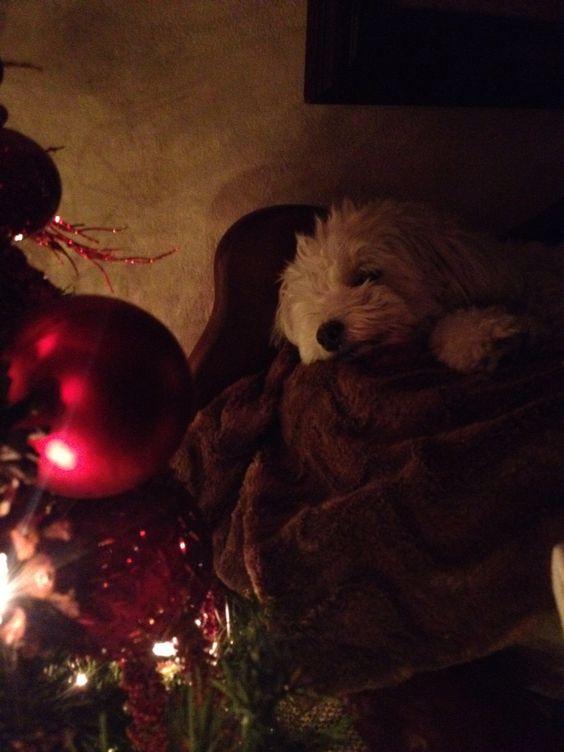 Blanca navideña!!