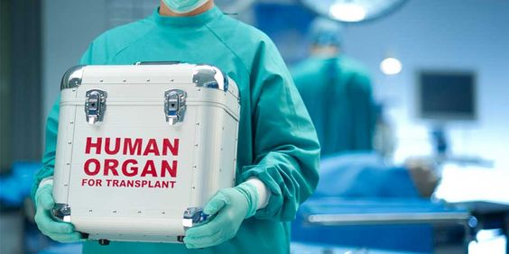 The Basics Of Organ Donation: Can I Donate Organs?: