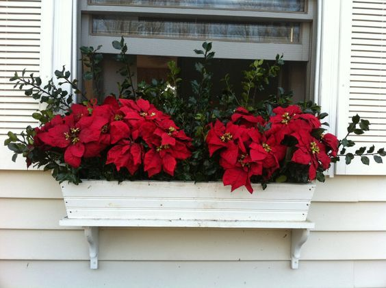 Ideas For A Winter Window Box Bless My Weeds Winter Window Boxes Christmas Window Boxes Window Box Flowers