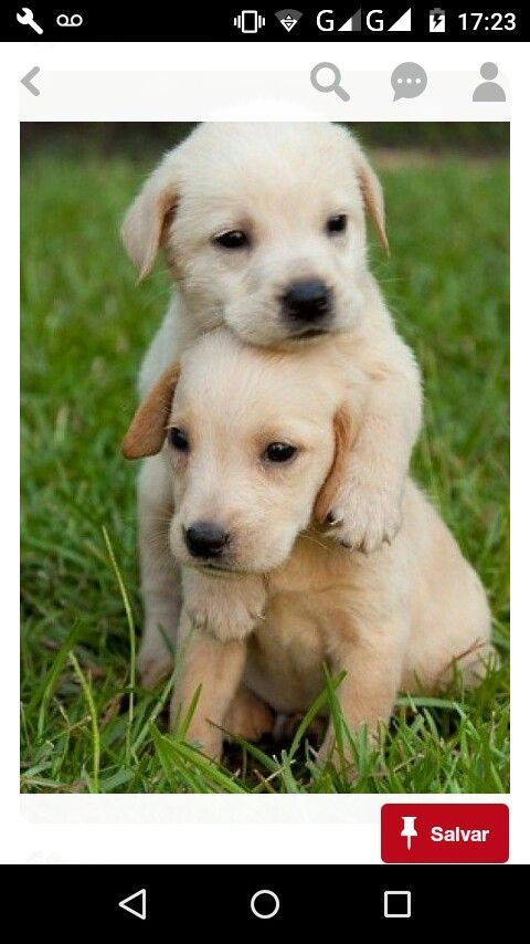Are They Twins Twin Dogs Cute Baby Animals Cute Animals Puppies