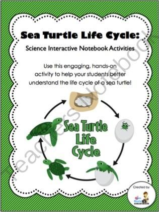 life cycle of a sea turtle science interactive notebook activity from 3rd grade gridiron on. Black Bedroom Furniture Sets. Home Design Ideas