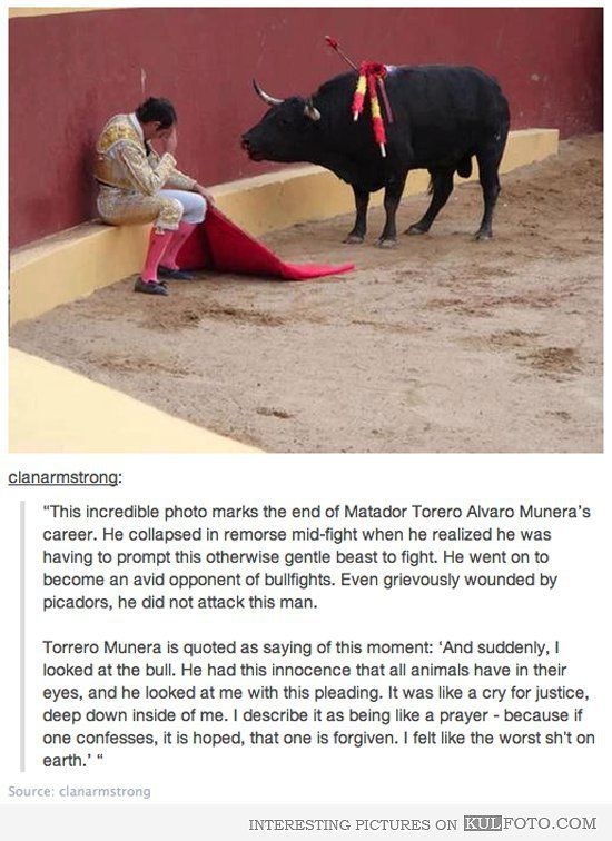 Image result for image of matador with bull and remorse
