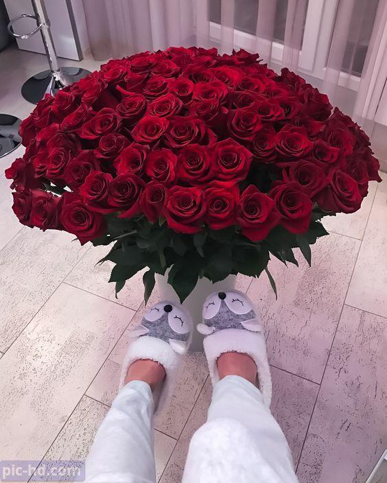 صور ورود أجمل صور خلفيات ورد للهاتف أجمل الورود الطبيعية Luxury Flowers Beautiful Roses Beautiful Flowers