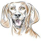 Close Up Do Cão Do Schnauzer Diminuto Da Raça Do Vetor - Baixe conteúdos de Alta Qualidade entre mais de 50 Milhões de Fotos de Stock, Imagens e Vectores. Registe-se GRATUITAMENTE hoje. Imagem: 19690320