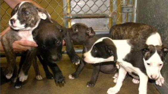 Retiren a Kirsten Gross de su cargo como Director del Refugio de Animales del Condado de Madera, por maltrato animal, desidia y eutanasias descontroladas.