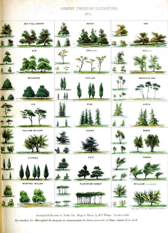 Vintage Printable at Swivelchair Media - Beta | Botanical – Trees
