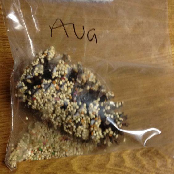 My little girl Ava's bird project from preschool today!