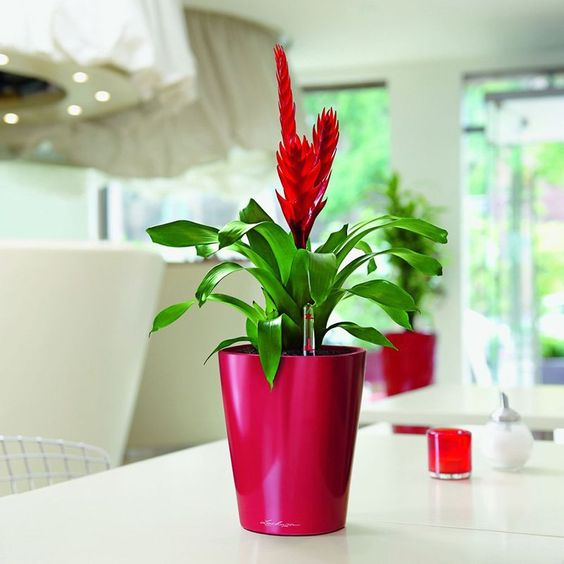 Have to have it. Round Lechuza Deltini Self-Watering Indoor Planter - $24.99 @hayneedle.com