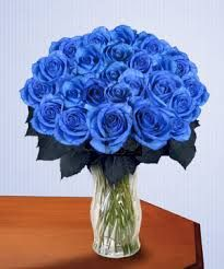beautiful blue roses