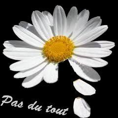 Est-ce que tu m'aimes ? #marguerite #pétale #unpeu #beaucoup #passionnément