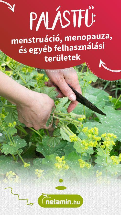 természetes gyógynövények menopauza fogyás