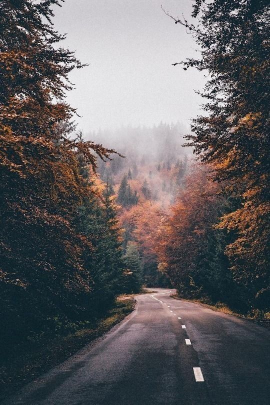 Kartinka Krasota Priroda Lyubov Vdohnovenie Zakat Kartinka Na Ajfon Kartinka Na Avu Nature Photography Autumn Scenery Nature