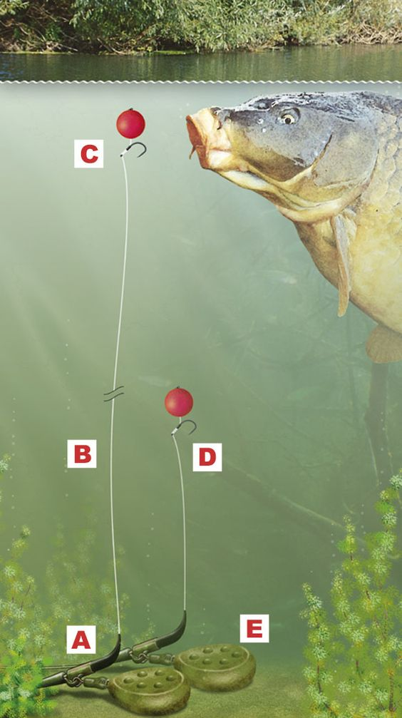 Freshwater Fishing Rigs