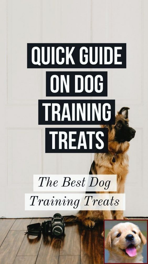 1 Have Dog Behavior Problems Learn About Dog Behavior When Your