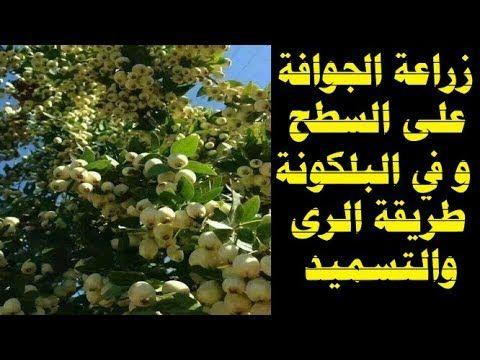 زراعة الورد الجورى هرمون تجزير طبيعي Youtube Plants