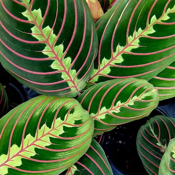 12 best plants that can grow indoors without sunlight the plant searching and low light plants - Plants for low light indoors ...