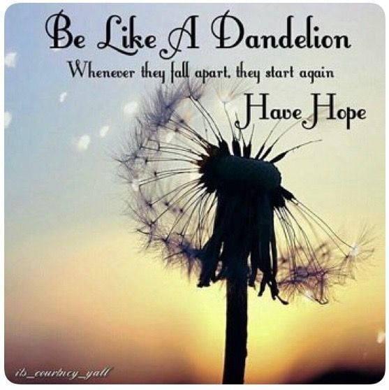 Pin By Amy Shimerman On Quotes In 2020 Flower Quotes Love Dandelion Quotes Flower Quotes