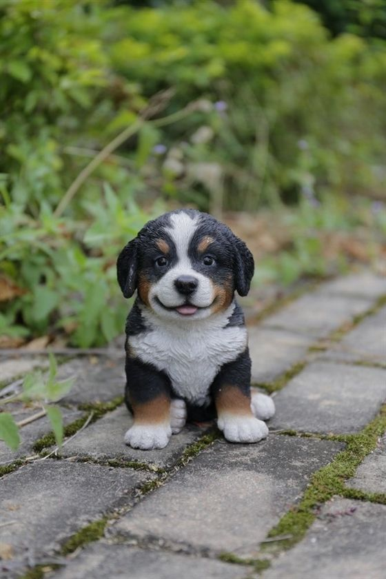 Choosing Plants To Entice Birds And Butterflies To Your Yard Puppies Bernese Mountain Dog Puppy Dogs