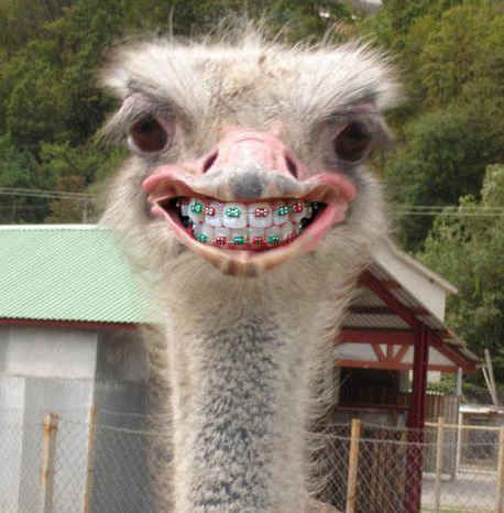 This ostrich.   14 Animals With Braces That Will Make You Smile: