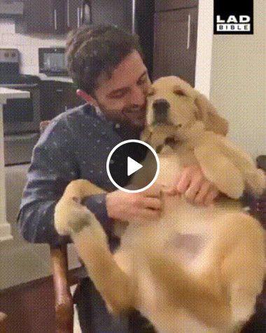 O cão viaja quando alguém faz coscas na barriga