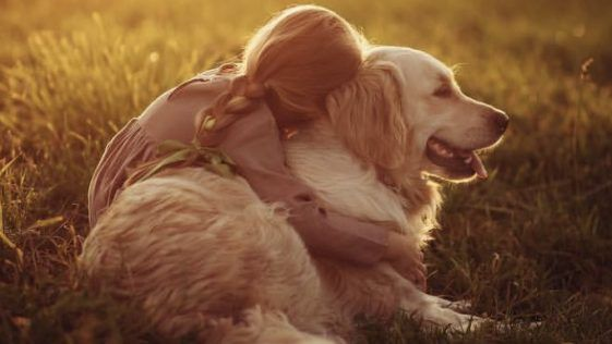 10 Funny Pictures Showing The True Temperament Of Golden Retrievers Ilovedogscute Com In 2020 Golden Retriever Funny Golden Retriever Funny Golden Retriever Pictures