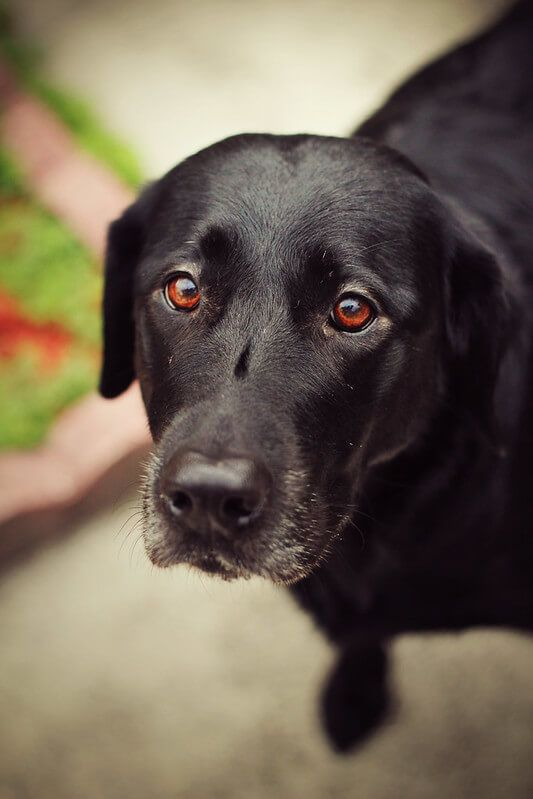 400 Black Dog Names Choose The Best Name For Your Labrador In 2020 Black Dog Names Dog Names Black Dog