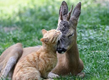cat kiss deer!!!!