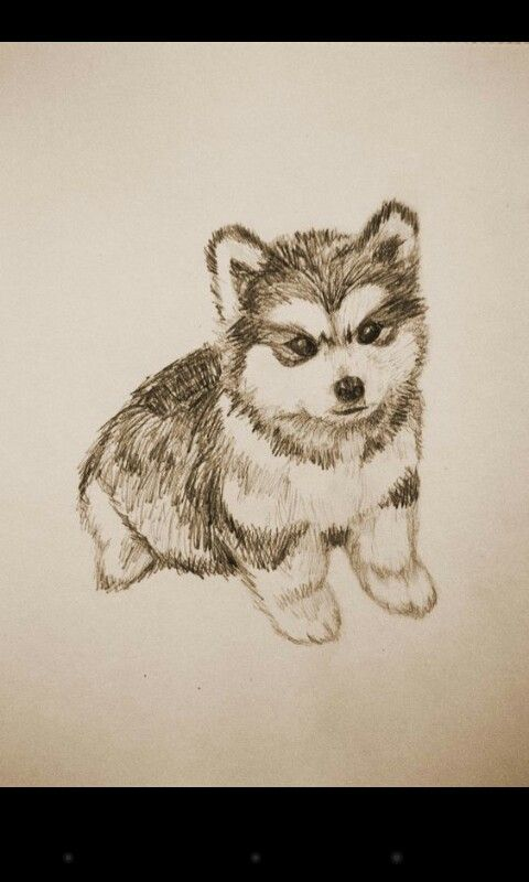 Pin De Alicia Martinez En Dibujos A Color Perros Dibujos A Lapiz