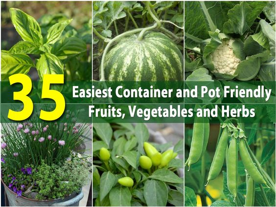 Gardens Container Gardening And Fruits And Vegetables On 400 x 300