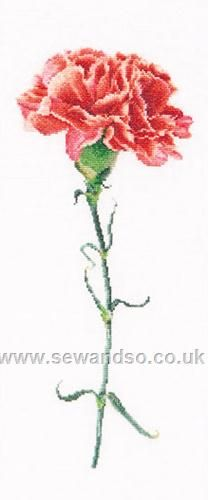 Buy Red Carnation Cross Stitch Kit Online at www.sewandso.co.uk