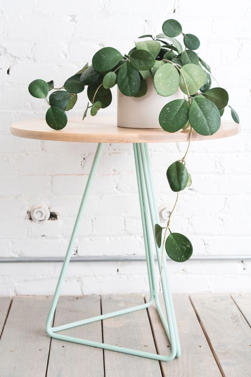 Structural side table and house plant