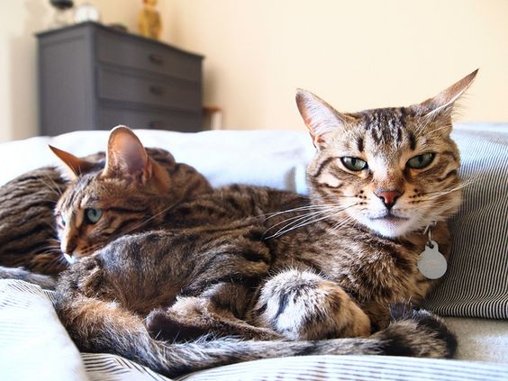 When I'm ready/financially prepared to get another cat I want to get a pair so they have a buddy. #catlady