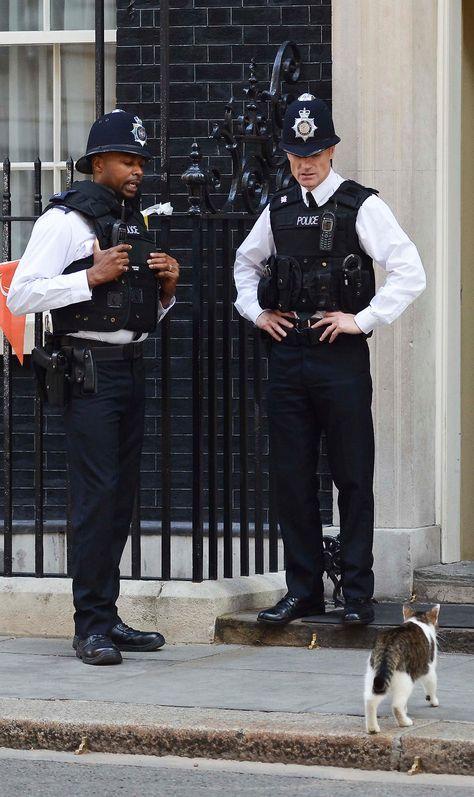 猫を見つめる警察官