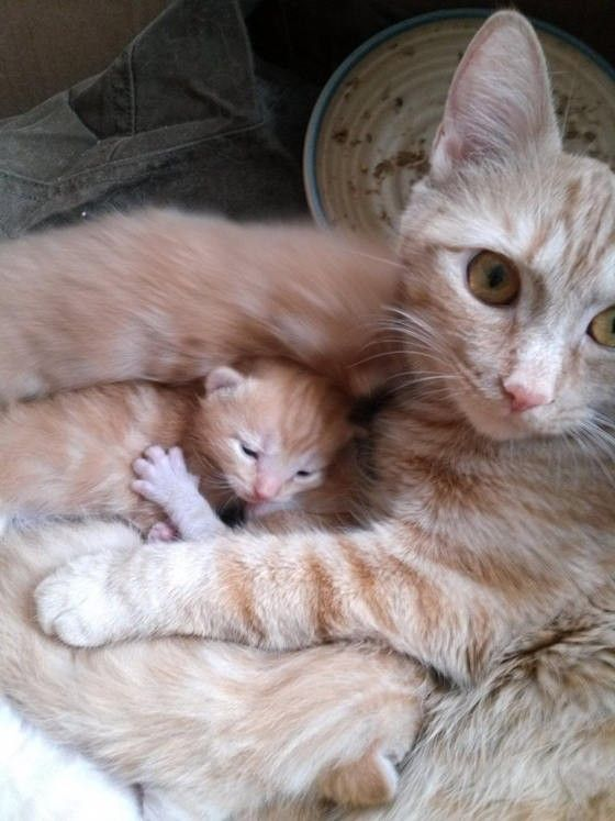 Beautiful rescue mom with her mini me.