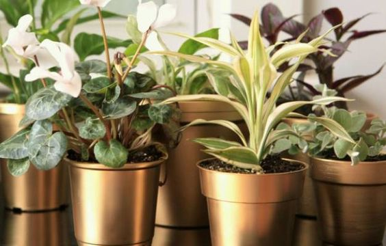 My Gilty Pleasure: Gold Painted Flower Pots