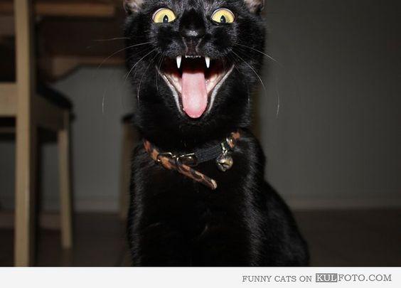laughing black cat -#main
